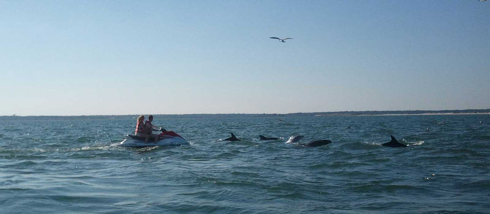 2-Hour Dolphin/Sight-Seeing Trips